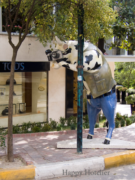 Istanbul Paparazzi Cow